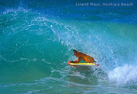 Havajské ostrovy, ostrov Maui, surfování